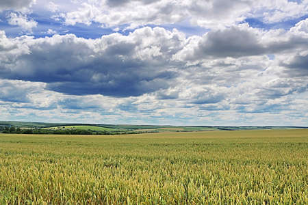 Countryside with wheat field and cloudy sky Stock Photo