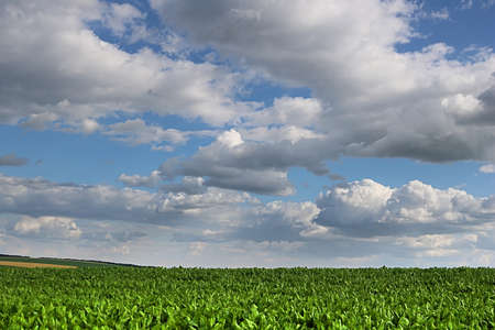 Countryside with sugar beet field and cloudy sky Standard-Bild