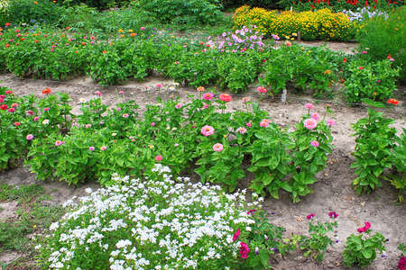 Flowerbed with different flowers in botanical garden in the summer Banque d'images