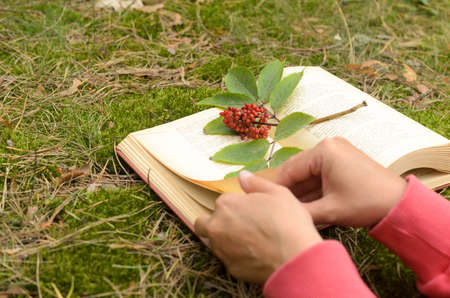 An open book on the grass decorated with a branch with berries