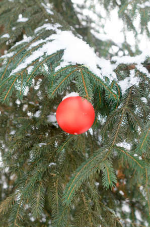 Red Christmas balls on a branch of a tree covered with snow