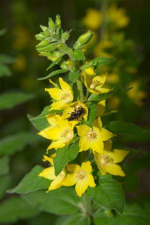 The bee makes honey photo