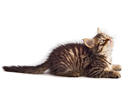 Photo of an adorable cat a over white background Stock Photo - 655558
