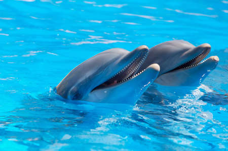 Happy dolphins in the blue water of the swimming pool Stock Photo - 675581