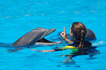 Photo of dolphins doing a show in the swimming pool photo