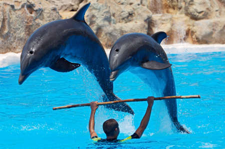 photo of dolphins doing a show in the swimmingpool Stock Photo - 684169