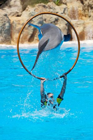 photo of dolphin doing a show in the swimming pool photo