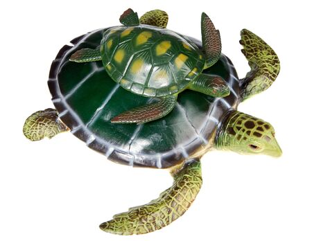 Turtle with your son a over white background photo