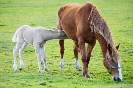 adorable  horse with its mother eating green grass Stock Photo - 803449