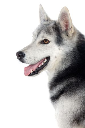 adorable dog a over white back ground photo