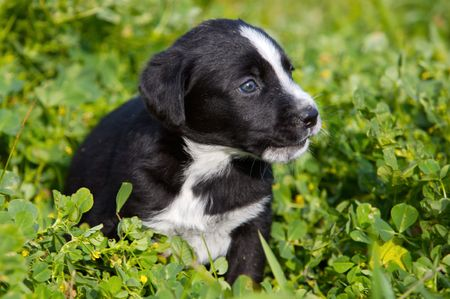 adorable small dog on the green grass photo