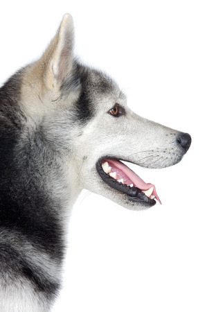 an adorable dog a over white background photo