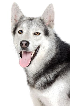 one adorable dog a over white background photo
