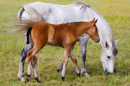 adorable small horse with his mother eating green grass Stock Photo - 3002240