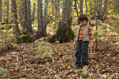 Precious child picking mushrooms in a forest in autumn photo