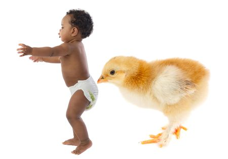 baby bird: Beautiful african baby running scared by a huge chicken