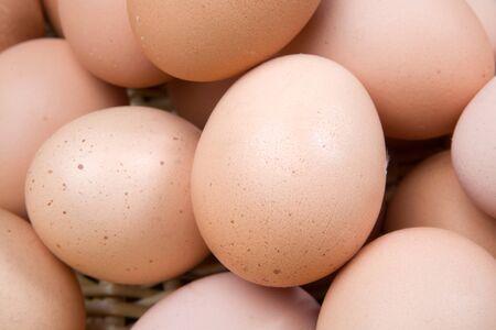 gallina con huevos: Fotos macro de muchos huevos de gallina marr�n