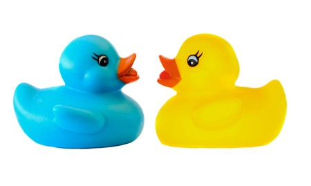 Two plastic duck in love on a over white background photo