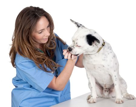 Veterinary with a dog for a review isolated on white background photo