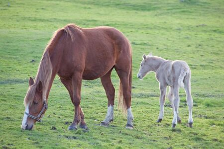 Adorable baby horse with its mother eating green grass Stock Photo - 6747160
