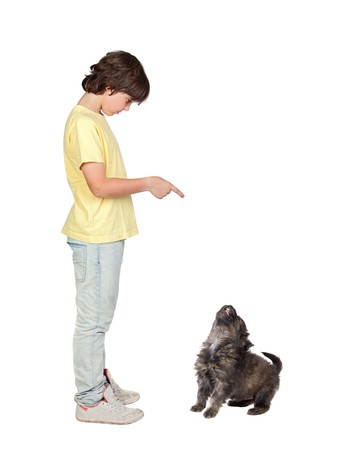 to obey: Child taught to obey his puppy isolated on white background Stock Photo