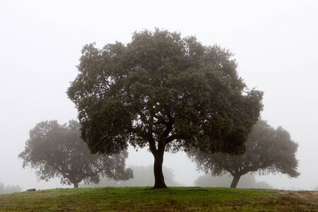 Many trees surrounded by fog photo