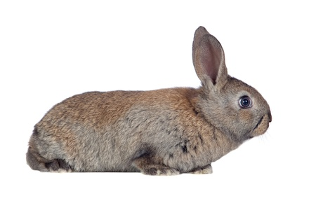 Nice brown bunny isolated on white side Stock Photo - 8821912