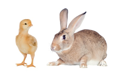 Two different farm�s animals isolated on white background photo