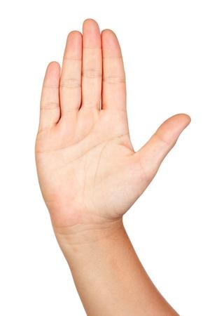 mãos: Abra a mão isolada no fundo branco