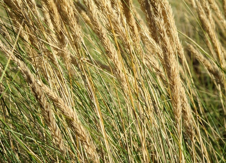 gramineous: Beautiful wallpaper image with many grasses herbs Stock Photo