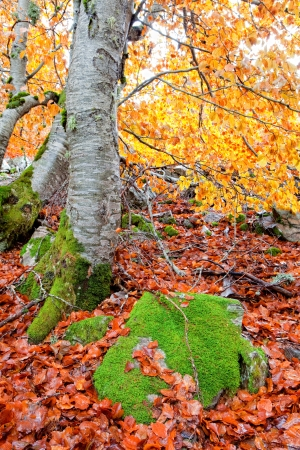 Beautiful picture of autumn with yellow leaves Stock Photo - 16447905