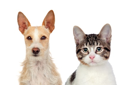 Close-up Of Cat And Dog Isolated Over White Background photo