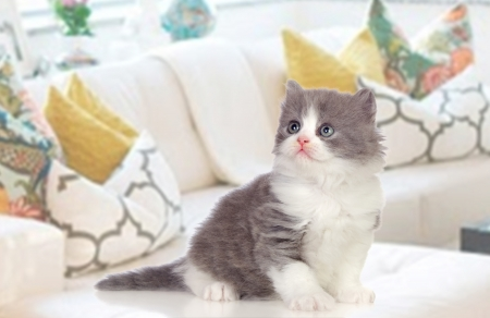Lovely Persian kitten sitting on the couch at home photo