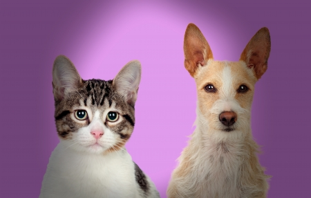 Close-up Of Cat And Dog Over Purple Background photo