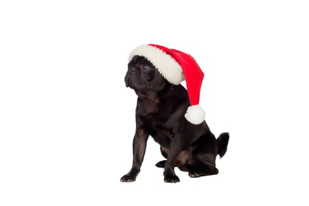 Nice pug carlino dog with Christmas hat isolated on white background Foto de archivo