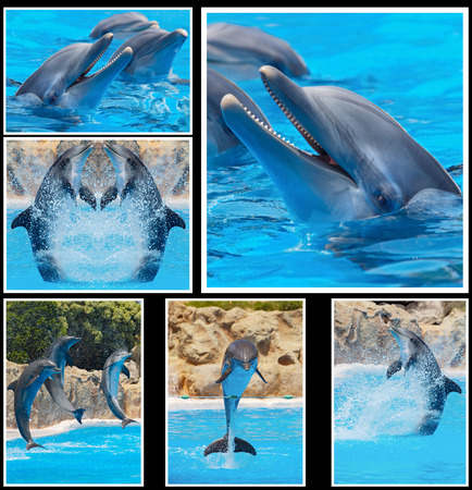 Collage of many photos of dolphins in a show photo
