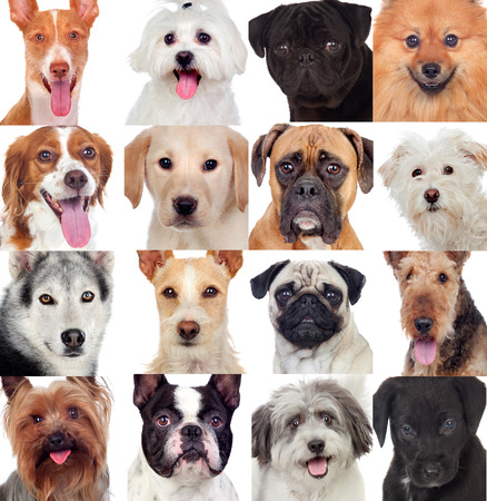 Collage with many dogs isolated on a white background Banco de Imagens
