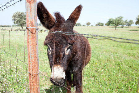 Brown donkey near a fence in the field
