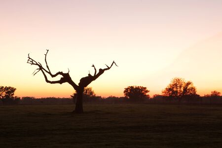 sky brunch: Beautiful sunset in the meadow of Extremadura in Spain