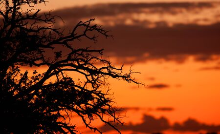 outumn: Beautiful sunset with orange colors with the shadows of the branches of a tree in the foreground Stock Photo