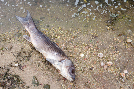 ecological problem: Dead fish on the shore of a lake
