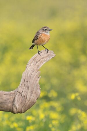 Beautiful wild bird perched on a branch in nature Stock Photo