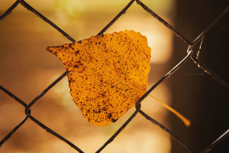 Yellow leaf in a metallic fence. Colors from autumn