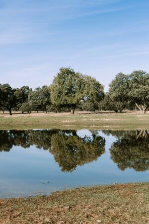 dyllic: Beautiful scenery of the banks of a river with oak trees reflected in water