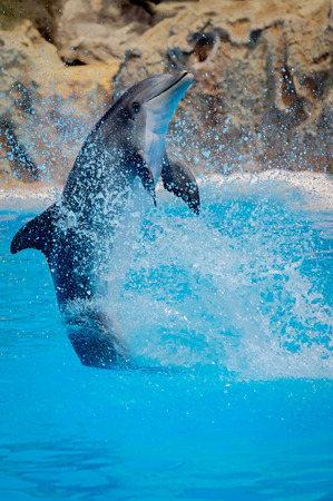 bottlenose: Funny dolphin jumping during a show at a zoo Stock Photo