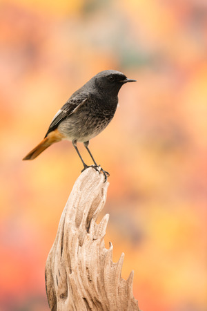 Small bird on a trunk with a beautiful colorfully background Stock Photo