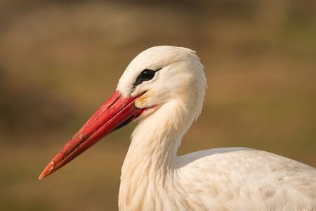 attachment: Natural profile of a elegant stork in the field Stock Photo