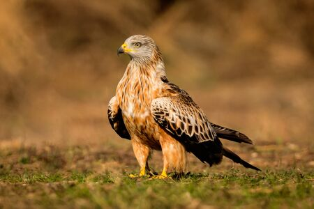 Awesome bird in the field with a beautiful plumage