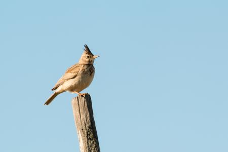 Beautiful bird on a stick with the sky of background Reklamní fotografie - 77904416