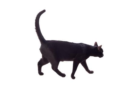 Gatto nero con gli occhi gialli isolato su uno sfondo bianco Archivio Fotografico - 80756155